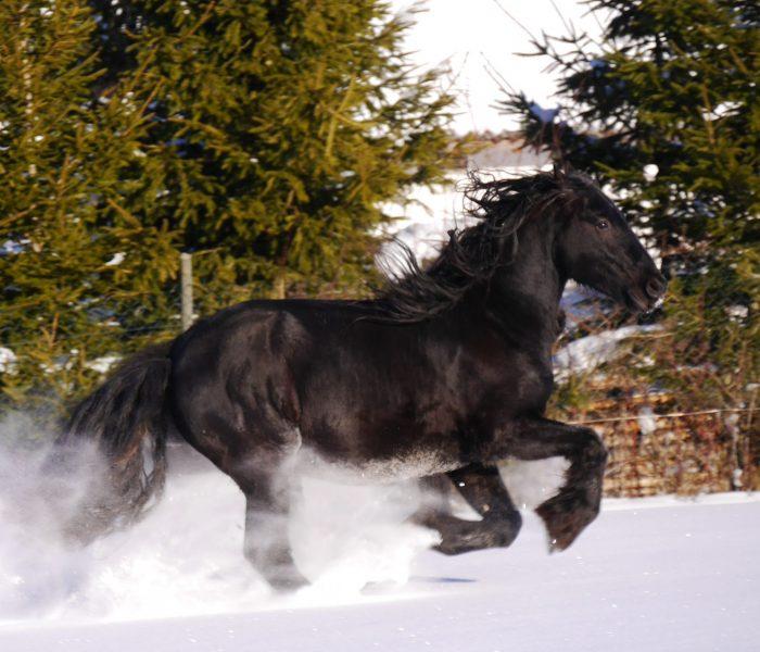 Winter auf dem Bellihof, Startseite FPZV
